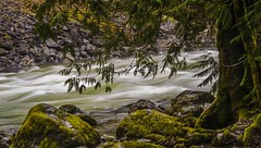 Portrait of a River (DecentXposure) Tags: longexposure water river moss whitewater swift chilliwackriver nikond300