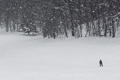 Cross-country Skiing during a Snowstorm in Central Michigan (Lee Rentz) Tags: winter usa snow cold america skiing purple snowy michigan snowstorm karen northamerica snowing skier centralmichigan crosscountryskiing stanwood bigrapids nordicskiing karenrentz