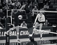 Intensity (mnmfotofolio) Tags: blackandwhite monochrome pennstate volleyball ncaa firstround 2015 pennsylvaniastateuniversity womensvolleyball rechall ladylions alifrantti