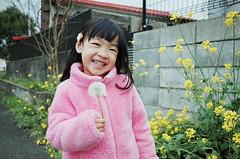 Hana Girl (藍川芥 aikawake) Tags: travel pink flowers nature beautiful smile japan wonderful fun happy kid spring funny tour child outdoor grace dandelion 日本 littlegirl cheerful kyushu yufuin 九州 油菜花 湯布院 gingerlily 由布院 littlechild rapeflower