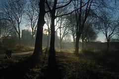 Morninglight (piet_nicolaas) Tags: blue trees shadow colors dark path wintertime lightfall