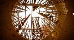 Los pjaros. | The birds. Miles de pjaros de papel en honor al polica Sean Collier que muri en MIT en 2013 durante las persecuciones de los autores de los atentados en Boston.  (Federico Kukso) Tags: las en birds boston collier de los al mit honor que sean pjaros miles papel durante | the muri autores polica atentados 2013 persecuciones