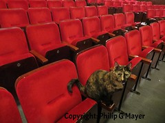 """The audience for """"Cats"""" was smaller than expected. (philipgmayer - Thanks for a lot of views.) Tags: liverpool cat theatre explore epstein cilla flickrexplore"""