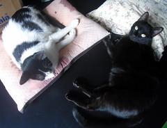 Namastê e Sam-Pá, amigos - DSC02495 (Dona Minúcia) Tags: friends sleeping amigos cute art animal cat relax bed peace arte paz gato cama fofo dormindo gracinha namastê sampá