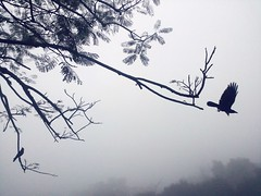 Get Set Fly (ainulislam) Tags: park morning winter blackandwhite tree bird fog fly still branch dhaka bangladesh bnw