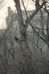 20. Big mushrooms (Misty Garrick) Tags: fortsnelling fortsnellingstatepark