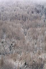 FEM_4528m (MILESI FEDERICO) Tags: world winter wild italy snow ice nature nikon italia details natura neve dettagli inverno alpi montagna freddo nevicata valsusa dettaglio nital valdisusa milesi alpicozie valledisusa d7100 visitpiedmont altavallesusa altavaldisusa valliolimpiche nikond7100 milesifederico