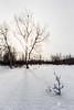 Premiers rayons (photosenvrac) Tags: hiver neige nordik motoneige 2016 finlande laponie thierryduchamp