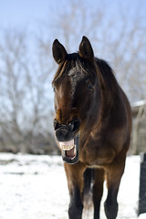 Warm (Nix Alba) Tags: horses horse animal animals outdoors outdoor racehorse thoroughbred equine thoroughbreds equines offtrackthoroughbred