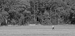 Walk The Line (C_MC_FL) Tags: trees blackandwhite bw man tree nature contrast canon way walking person photography eos blackwhite alone fotografie path natur wiese sw mann hayfield tamron 90mm kontrast bume baum weg gehen pfad spazieren alleine schwarzweis 60d f004