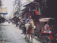 Nadir Shah Invades Delhi! (Mayank Austen Soofi) Tags: horse delhi shah invades nadir walal
