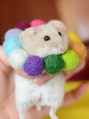 DSC_6305 () Tags: pet hamster  hammy    animal