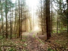 It's spring.. let's go for a walk! (maya the viking_girl) Tags: trees light texture nature leaves silhouette norway forest landscape spring woods shadows outdoor path evergreens tre