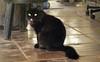 Gatinha mostrando lingua (Foto: Naotho) (naothop) Tags: harry potter céu gato linda lingua antena livro gatinho irmã concreto pedreiro mostrando