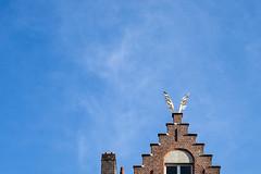 getting around Bruges (1) (penwren) Tags: city golden wings belgium transport brugge flight bruges landed goldenwings