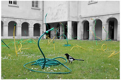 The Magpie and the Snakes. (sdupimages) Tags: street blackandwhite bw paris bird pie blackwhite noiretblanc pipe nb desaturation unusual magpie tamron rue oiseau insolite partial tuyaux partiel 1750f28 eos70d