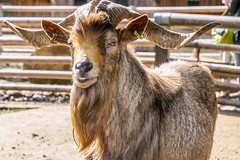 """Tierpark Lohberg • <a style=""""font-size:0.8em;"""" href=""""http://www.flickr.com/photos/58574596@N06/26115469525/"""" target=""""_blank"""">View on Flickr</a>"""