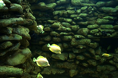 DSC03721 (emmanrog) Tags: peces animales marino acuario