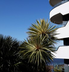 Palms with a view (Torquay Palms) Tags: uk blue sea england sky west building english beach beautiful abbey 30 canon palms eos restaurant bay spring riviera view britain pierre balcony south united country great kingdom palm m devon le promenade gb april tor sands seafront torquay complex ef seaview westcountry devons the torbay bistrot 2016 22mm