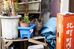 Today's Cat@2016-04-02 (masatsu) Tags: cat pentax cc100 catspotting mx1 thebiggestgroupwithonlycats