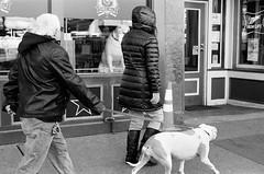 Doggy in the Window (TnOlyShooter) Tags: dog film window analog nashville tennessee streetphotography doggy olympusom1 kodaktrix400 olympusomzuiko50mmf18 findlab