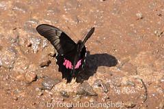 Argentinien_Insekten-74 (fotolulu2012) Tags: tierfoto