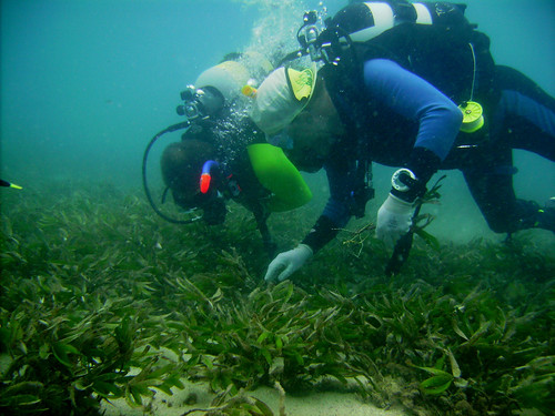 Madagascar diving