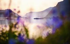 DSC07897ChristopheCarlierm (christophe carlier) Tags: sunset norway bokeh sony olympus lofoten a7 coucherdesoleil midnightsun norvge zuikoom55mmf12