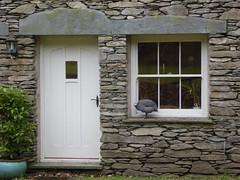 Guinea Fowl (The3Winds) Tags: windows doorway guineafowl