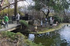 Edinburgh zoo (PhylB) Tags: pelicans edinburghzoo