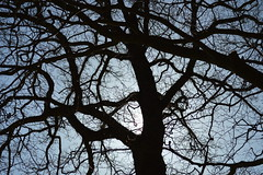 Silhouette (Albie n Glo) Tags: blue sky sun black tree silhouette branches edale