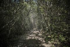 Passaggio (sdrusna79) Tags: siena sentiero piante paesaggio bosco foresta giubileo passaggio colledivaldelsa nikond7100
