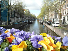 Flowers in Amsterdam. (Flyingpast) Tags: travel flowers blue light vacation house holiday plant holland colour tourism water netherlands amsterdam yellow boats outdoors canal petals spring europe pretty flowerbed waterway capitalcity citybreak wb2000 tl350