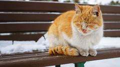 喵 (何神) Tags: snow 冬天 毛 瞇眼