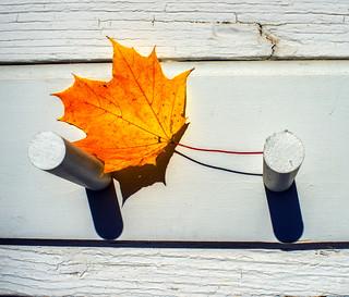 Autumn Leaf On Pegs