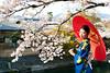 japanese kimono woman and traditional red umbrella (sushisake12) Tags: japan 京都 桜 日本 花 木 自然 旅行 笑顔 青 人物 公園 着物 傘 美女 ポートレート 春 和 花見 伝統 文化 赤 芸者 和服 観光 日本人 美しい 美人 青空 女性 季節 和傘 番傘 さわやか 桃色 帯 晴れ 花びら 一人 視線 鮮やか 若い 古風 清潔 20代 屋外 小紋 見つめる 10代 開放感
