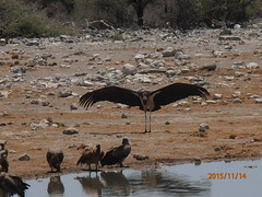 Africa 2015 579 (Absolute Africa 17/09/2015 Overlanding Tour) Tags: africa2015