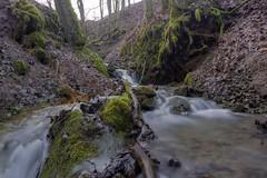 Am Riedwiesengraben