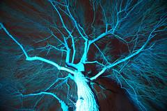 veins of live (christophhornung142) Tags: red green rot colors yellow night licht purple nacht sony illumination gelb blau farbe bume mannheim violett luisenpark langebelichtung strucher winterlichter sonyalpha6000 stimmunglichtknstler