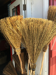 New Brooms (RobW_) Tags: africa new west coast south tuesday winkel cape february brooms westerncape paternoster 2016 09feb2016