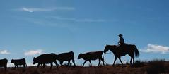 cowboy Washington County 2 13 2016-7944 (houstonryan) Tags: ranch art up st print photography cow utah george cowboy photographer cattle ryan houston warner photograph valley round february rancher 13 roundup 2016 utahn houstonryan