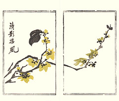 Wintersweet (Japanese Flower and Bird Art) Tags: flower art japan japanese book picture nagasaki woodblock chimonanthus tsubaki wintersweet calycanthaceae praecox chinzan readercollection