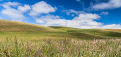 win 11? (nzfisher) Tags: newzealand sky field grass clouds canon landscape canterbury pasture southisland 24mm cokin