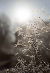 winter light - HBW! (Jo Evans1) Tags: winter light gardens wales wednesday bokeh branches frosty national botanic hbw