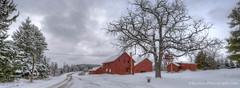 Red Barns ... winter, II (Ken Scott) Tags: road winter usa snow michigan farm january hdr redbarns leelanau 2016 45thparallel panoramacrop