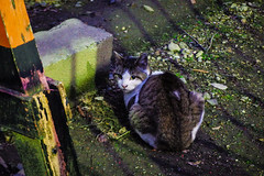 Today's Cat@2016-02-01 (masatsu) Tags: cat pentax cc100 catspotting mx1 thebiggestgroupwithonlycats