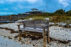Honeymoon Island (BuccaneerBoy) Tags: statepark family trees beach gulfofmexico water grass birds fun sand florida sandy dunedin honeymoonisland
