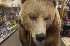 Dart & b̶̶e̶̶e̶̶r̶  bear (michael_hamburg69) Tags: bear usa beer shop alaska ak darts dart ketchikan