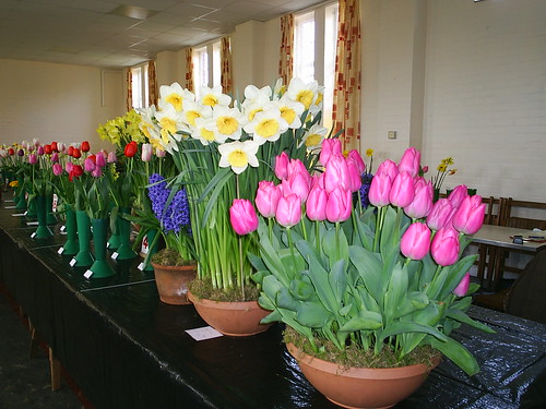 General view of one of our recent flower shows by Bournemouth Gardening Club