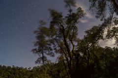 Al Son de los Vientos y las Estrellas (sierramarcos14695) Tags: naturaleza noche arboles guatemala viento movimiento estrellas nocturna laguna fotografia exposicion larga quetzaltenango chicabal